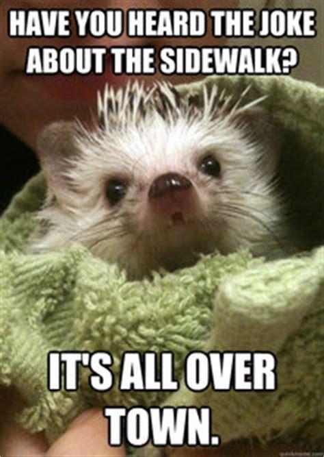 Hedgehog Memes - funny hedgehog memes