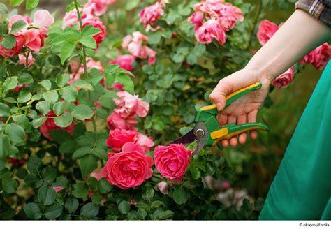 kletterrosen richtig schneiden rund um rosenbogen und rankhilfe