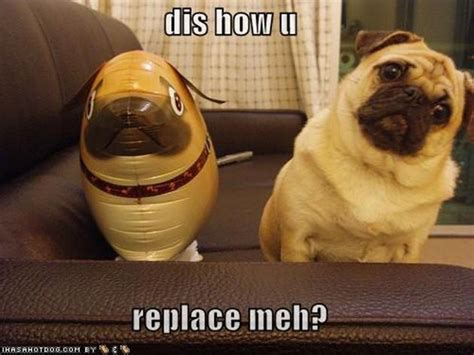 Funny Pug Meme - funny pug pictures 31 pics