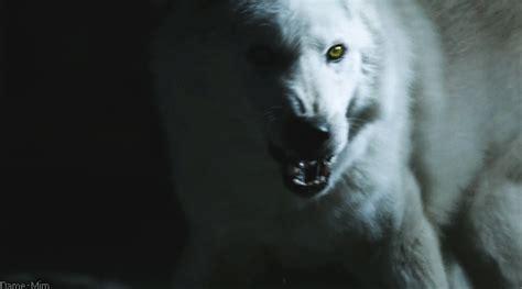 wolf gif  gifer  kigarn