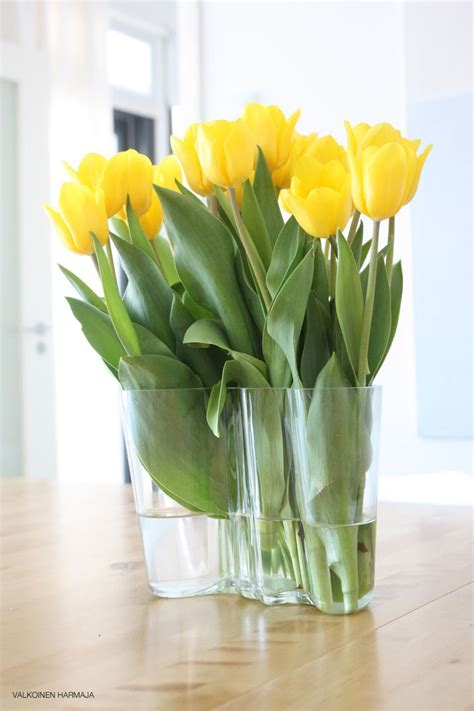 yellow tulips in iittala aalto vase iittala by our