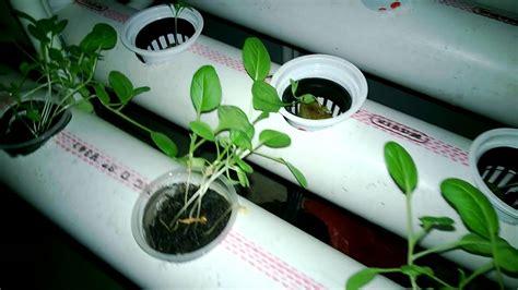 New Pot Hidroponik Wick System Mei hidroponik 3 doovi