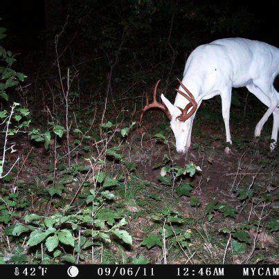 deer in the field on pinterest | 57 pins