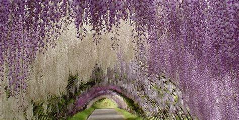 design love fest tokyo japanese wisteria tunnel garden design