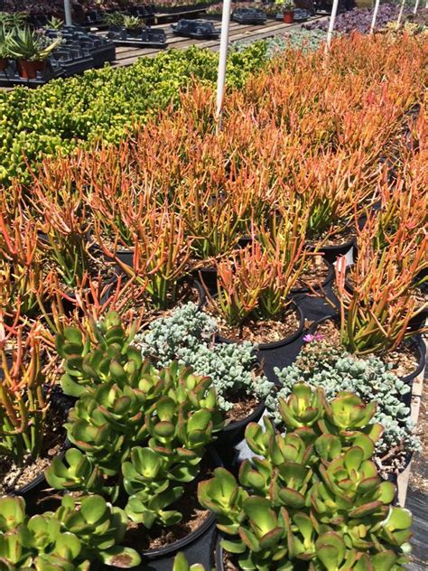 Sloat Garden by Succulents Sloat Garden Center
