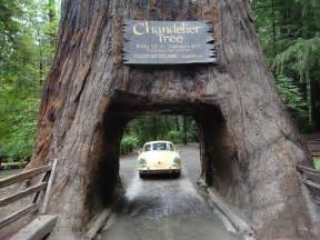 chandelier redwood tree mfs now u there s a drive thru for almost everything