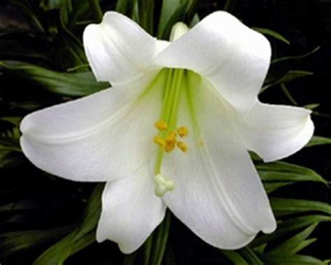 mandare dei fiori san valentino dillo con un fiore