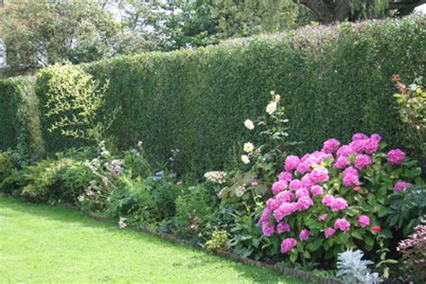 Quand Planter Les Hortensias by Gallerie Au Jardin