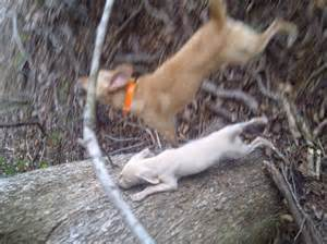 squirrel puppies for sale finished squirrel for sale breeds picture
