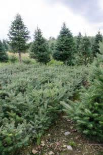 why balsam acres balsam acres wilbert s wholesale