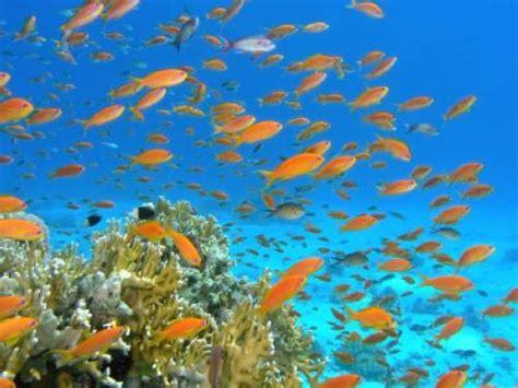 warum haben fische schuppen warum schwimmen fische im schwarm