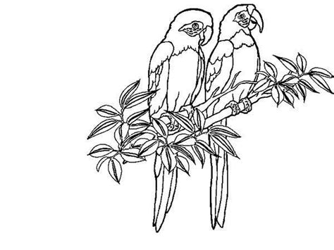 tropical rainforest plants printables sketch coloring page