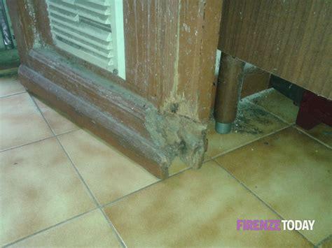 topi in casa cosa fare san jacopino soffitti crollano e topi in casa