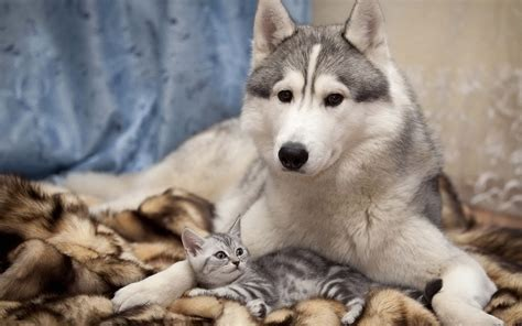 wallpaper cat and dog hd wallpapers hd cat and dog images dogs cats wallpaper jpg