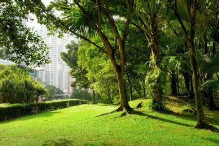 imagenes verdes hermosas 193 reas verdes urbanas meio ambiente infoescola