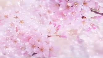 Free Business Report Template pink flowers abstract wedding background 01 stock video