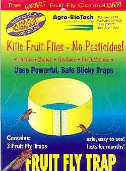 fruit fly trap picture