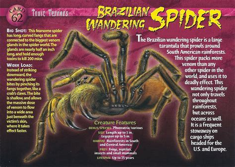 Brazilian Wandering Spider ? WeNeedFun