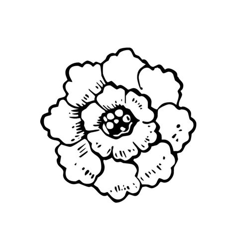 imagenes de flores de muertos flor de muerto para colorear pintar e imprimir