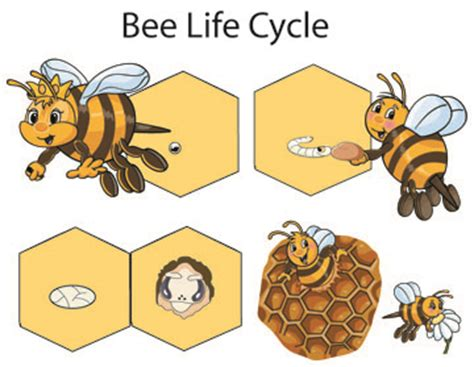 images of bee curriculum for preschool bees crafts activities lessons games and printables