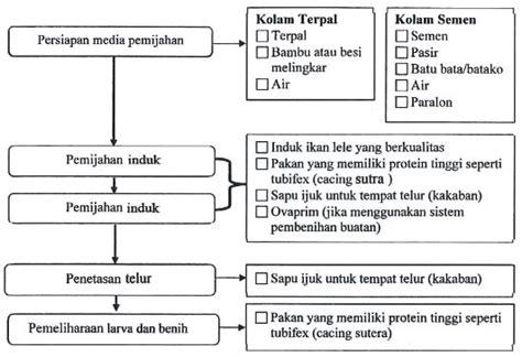 Pakan Untuk Larva Ikan Lele proses produksi pembenihan ikan lele bahan pendukung