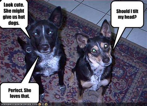 Funny Meme Dog