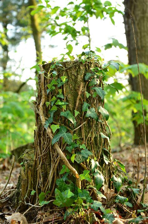 Tanaman Jadi Bunga Hujan gambar alam rumput cabang pertumbuhan menanam daun bunga bagasi musim panas