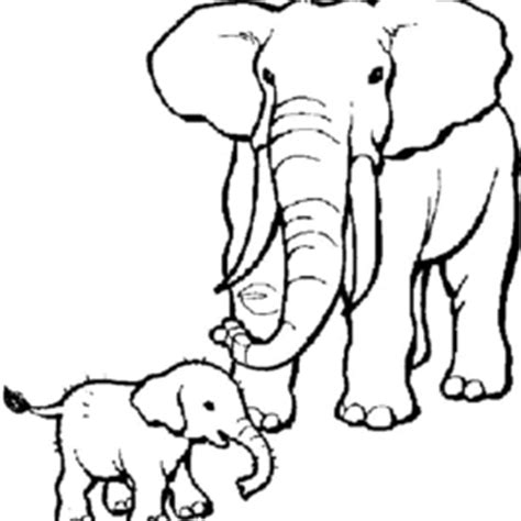 elephant ear coloring page elephant ear coloring page archives mente beta most