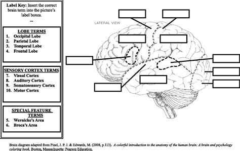 diagram of without labels brain diagram without labels in anatomy similiar brain