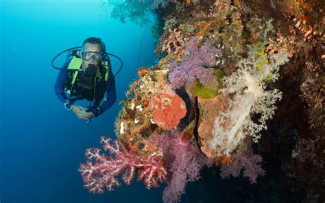 dive resorts magic island dive resort moalboal bluewater dive travel