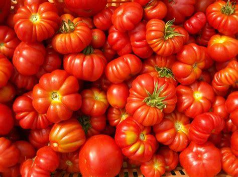 pomodori cuore di bue in vaso pomodori e passata sa m a s r l gastronomia propria