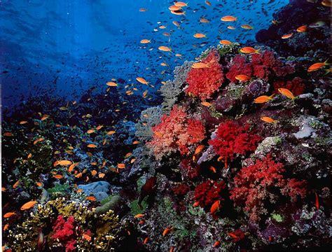 Soft Aquarium sea coral reef reef aquariums gibell aquarium society