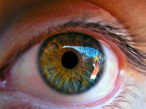 imagenes 3d ojos bizcos bioimpresi 243 n 3d de c 233 lulas oculares impresoras 3d