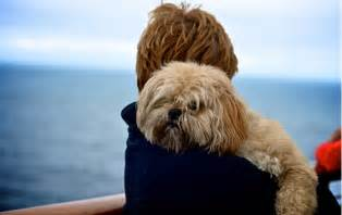 colleges that allow dogs pet friendly cruises american college of culinary language arts
