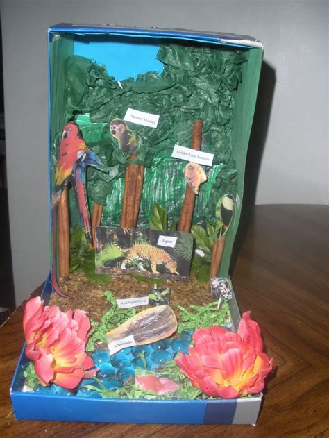 How To Make Rainforest Animals Out Of Paper - abbi s rainforest diorama for school country continent