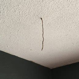termites hanging from a ceiling yelp