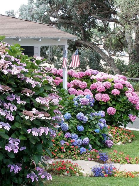 Flowering Shade Shrubs - 25 unique shade landscaping ideas on pinterest shade garden shade loving flowers and plants
