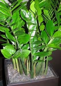 feng shui colors plants
