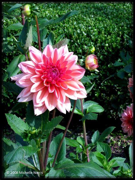 japanese flower gardens japanese garden flower