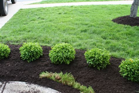 Bushes For Landscaping 20 Cozy Green Shrubs For Landscaping Images Landscape Ideas