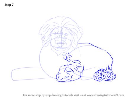 how to draw a goldendoodle step by step learn how to draw a goldendoodle dogs step by step