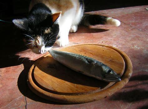 alimenti che fanno bene al fegato fegato e pesce fanno bene al gatto gattissimi