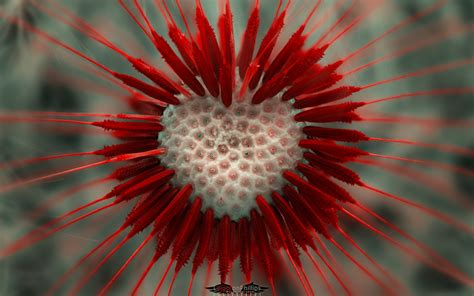 images of love and flowers dandelion wallpaper 657507