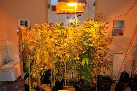 lade led indoor coltivare indoor con lade per coltivazione indoor una