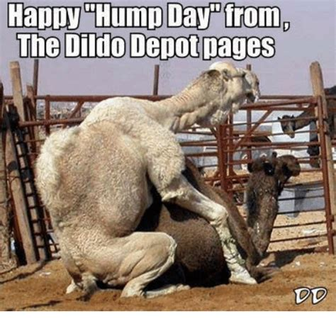 Funny Dildo Memes - funny hump day memes of 2016 on sizzle