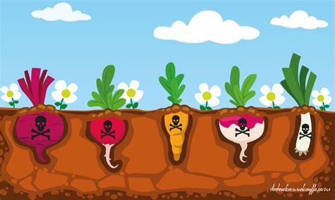 alimenti bio alimentation biologique 10 raisons de manger bio