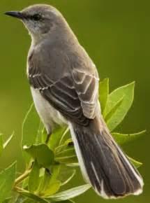 state bird of ar fl ms tn tx mockingbird