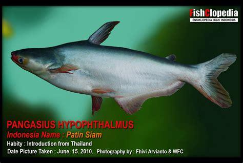 Ikan Gurame Hidup 1kg 23 Ekor budidaya perairan pengaruh alkalinitas terhadap kelangsungan hidup dan pertumbuhan larva ikan