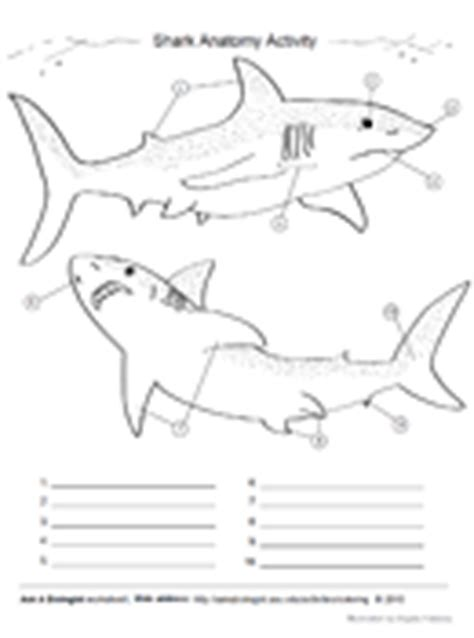 ask a biologist coloring page key worksheets shark dissection worksheet opossumsoft