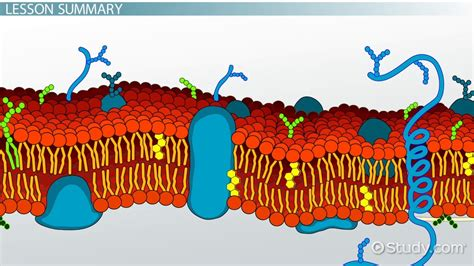 cell membrane definition location facts